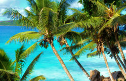 Tropical palm trees and ocean Stock Photo