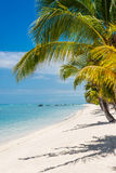 Tropical palm trees in the ocean, Mauritius. Stock Images
