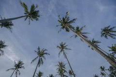 Tropical palm trees over sky with clouds during beautiful summer day Royalty Free Stock Image