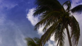 Tropical Palm Trees Paradise. Tropical palm trees shot on the South Florida Coast. Clouds in the beautiful sky. Shot on HDV 1080 stock video footage