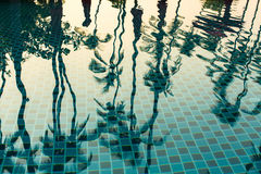 Tropical palm trees reflection in the water pool. Asia. Stock Images