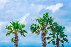 Tropical palm trees at scenic travel destination. Location. Beautiful scenery of natures trees with dramatic sky and clouds Stock Photos