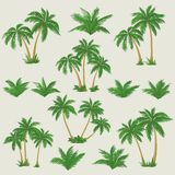 Tropical palm trees set Royalty Free Stock Photos