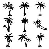 Tropical palm trees set vector illustration