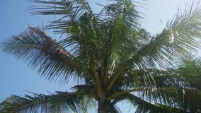 Tropical Palm Trees. Shot of a Tropical Palm Trees stock video