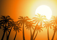 Tropical palm trees silhouette at sunrise.  Royalty Free Stock Photos