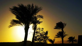 Tropical Palm Trees Silhouette on Sunset Background, and Outlines of the Mountains. Tropical Palm trees silhouette on sunset background, and the outlines of the stock video