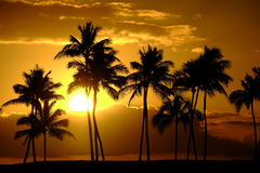 Tropical Palm Trees Silhouette Sunset or Sunrise. Tropical palm trees silhouette silhouetted by sunset of sunrise Stock Photo