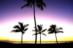 Tropical Palm Trees Silhouette Sunset or Sunrise Stock Images