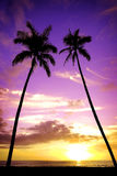 Tropical Palm Trees Silhouette Sunset or Sunrise. Tropical palm trees silhouette silhouetted by sunset of sunrise Stock Image