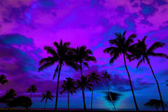 Tropical Palm Trees Silhouette Sunset or Sunrise Stock Image