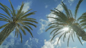 Tropical palm trees on a sky background. The wind shakes the branches of palm trees on a sky background stock video