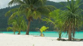 Tropical palm trees in a slight breeze on tropical sandy beach with blue ocean in background stock video footage