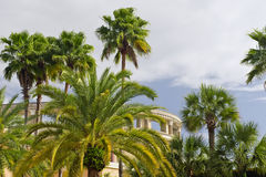 Tropical Palm Trees and Stadium Royalty Free Stock Photos
