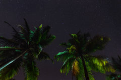 Tropical palm trees at summer, view of the star sky. Stock Photography