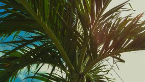 Tropical palm trees in summer vintage view. royalty free stock photo