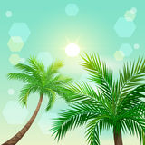 Tropical palm trees and sun in zenith Stock Photography