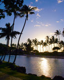 Tropical palm trees at sunrise Royalty Free Stock Photos