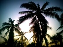 Tropical palm trees on a sunset