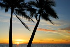 Tropical palm trees and sunset Stock Photo