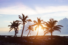 Tropical palm trees on sunset Stock Images