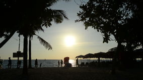 Tropical palm trees sway in wind at sunset. At Pattaya stock video footage