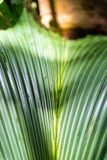 Tropical palm trees in Valle de Mai, Praslin, Seychelles.  royalty free stock photography