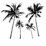 Tropical palm trees vector illustration
