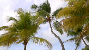 Tropical palm trees in the wind stock video footage