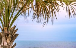 Tropical Palmetto Tree On Beach royalty free stock image