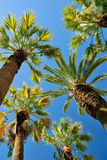 Tropical palms Stock Photos