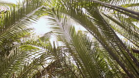Tropical palms above the water, view from below to the sky on a sunny day. Shooting in motion stock footage
