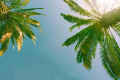 Tropical palms against blue sky. stock photos