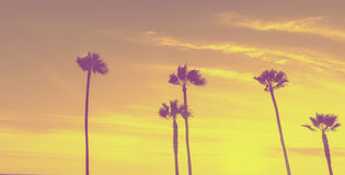 Tropical palms along Californian beaches. royalty free stock photography