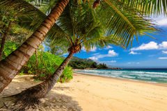 Tropical palms beach in Jamaica on Caribbean sea. Tropical beach and palm tree in Jamaica on Caribbean sea Stock Image
