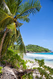 Tropical palms and the beach Royalty Free Stock Photo