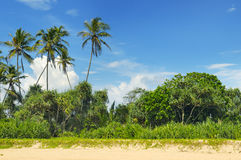 Tropical palms on the beach Stock Image