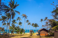 Tropical palms and beach Stock Images