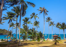 Tropical palms and beach Royalty Free Stock Images
