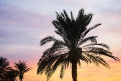 Tropical palms and beautiful sunset sky. On background royalty free stock photography
