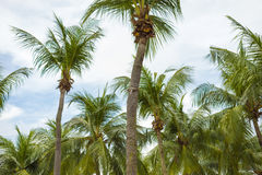 Tropical palms Stock Images