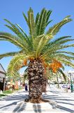 Tropical palms. Tropical palm trees and promenades, Greece Stock Photo