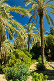 Tropical palms in the park Royalty Free Stock Images