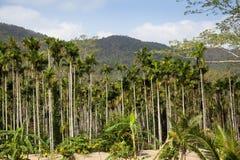 Tropical palms plantation Royalty Free Stock Photography