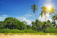 Tropical palms on the sandy beach Royalty Free Stock Image