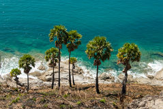 Tropical palms on the sea shore, Thailand. Tropical palms on the azure sea shore, Thailand Stock Image
