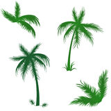 Tropical Palms Set Stock Images