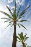 Tropical palms in sunny day Royalty Free Stock Images