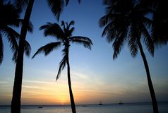 Tropical Palms at Sunset. Palm silhouettes on Aruba Beach at sunset, Tropical Caribbean Island Royalty Free Stock Image