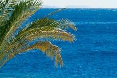 Tropical palmtree Royalty Free Stock Photo